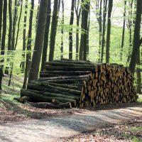 Holzpolter Eiche im Wald