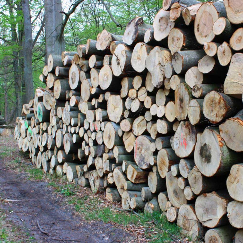 Holzpolter im Wald - Buche